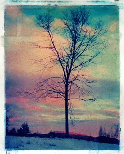 Tree in Stowe