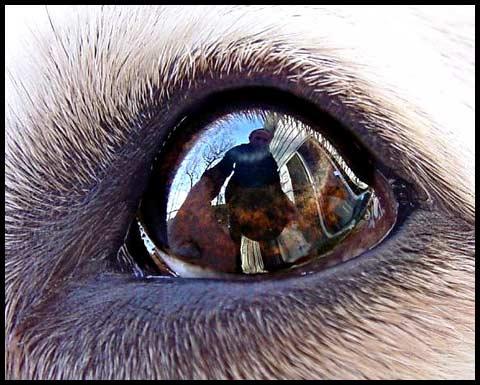 Niki's Eye